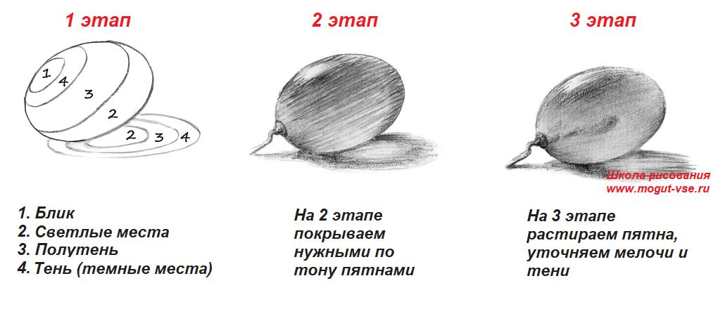 ur1-vinograd Как рисовать для начинающих