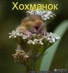 Жарова татьяна  аватар