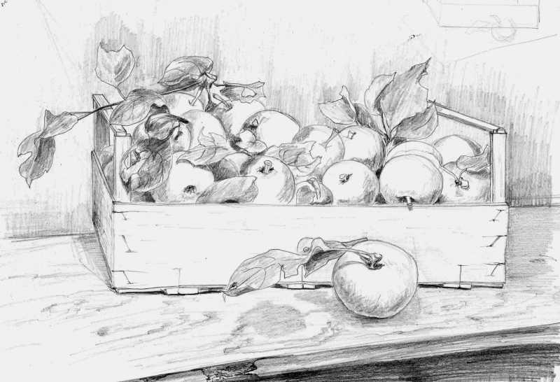 рисунок яблока карандашом: